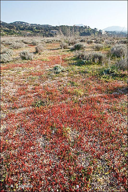 2230 - Dunes avec pelouses des <em>Malcolmietalia</em> - Cahiers d'habitats