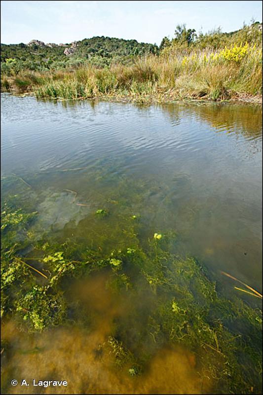22.41 - Végétations flottant librement - CORINE biotopes