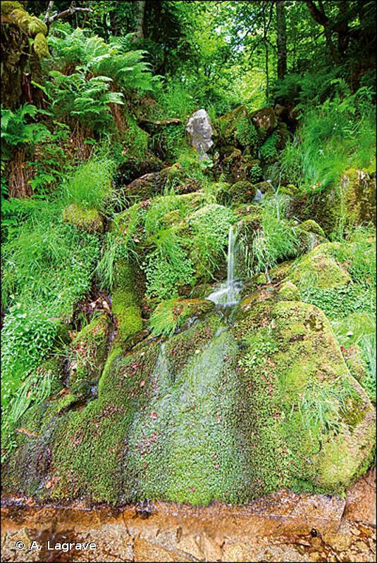 24.11 - Ruisselets - CORINE biotopes