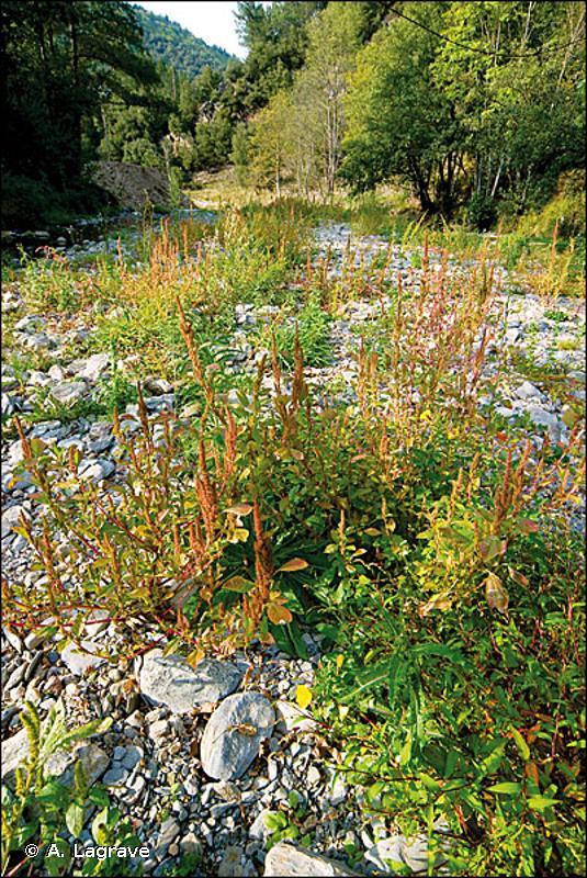 24.5 - Dépôts d'alluvions fluviatiles limoneuses - CORINE biotopes