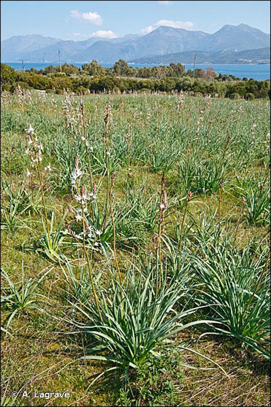 E1.C - Habitats méditerranéens secs à végétation herbacée non-vernale inappétente - EUNIS