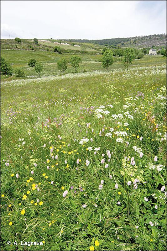 6520 - Prairies de fauche de montagne - Cahiers d'habitats