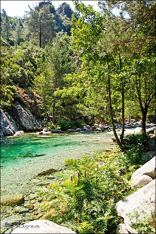 G1.13 - Forêts galeries méridionales à <em>Alnus</em> et <em>Betula</em> - EUNIS