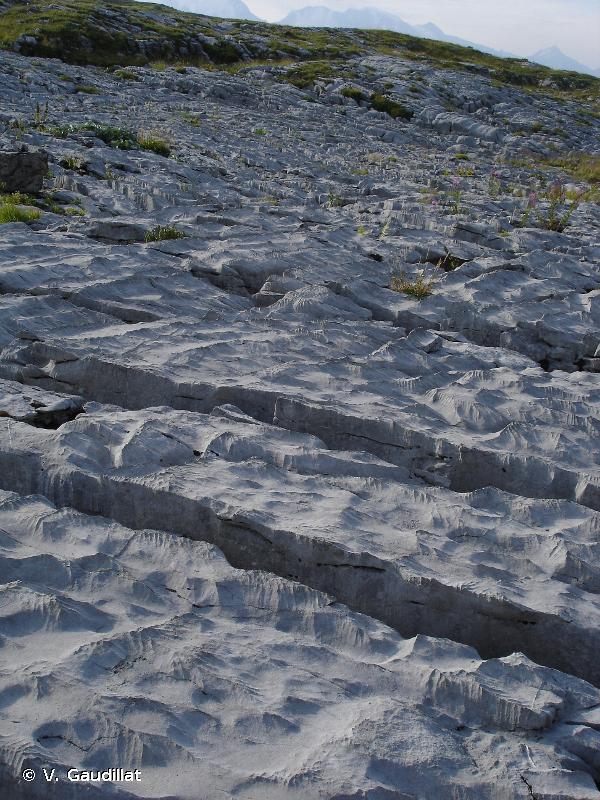 H3.511 - Pavements calcaires - EUNIS