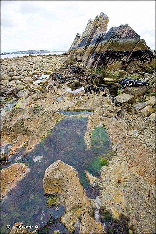 A1.41 - Biocénoses des cuvettes rocheuses intertidales - EUNIS