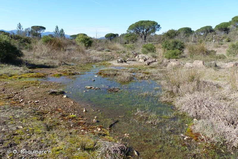C3.4212 - Gazons méditerranéens aquatiques à Isoète - EUNIS