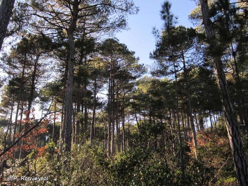 Bois de Bordezac et de Bessèges