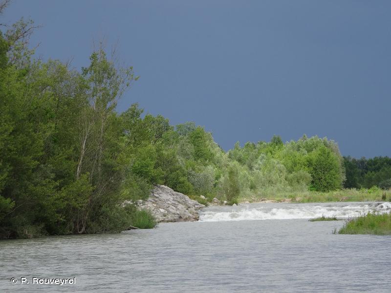 Milieux alluviaux du Rhône aval
