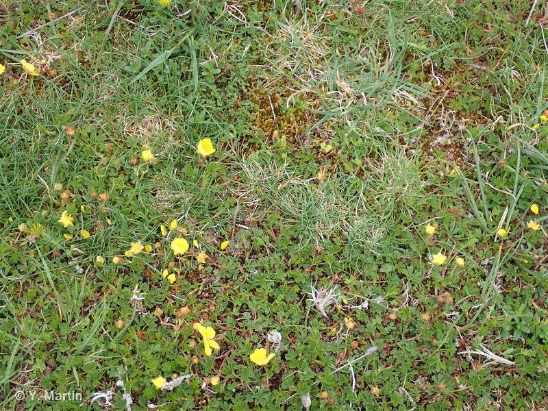 34.34 - Pelouses calcaréo-siliceuses de l'Europe centrale - CORINE biotopes