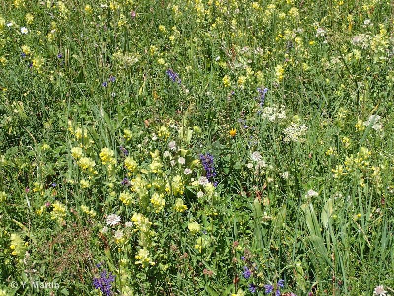 38.23 - Prairies de fauche submontagnardes médio-européennes - CORINE biotopes
