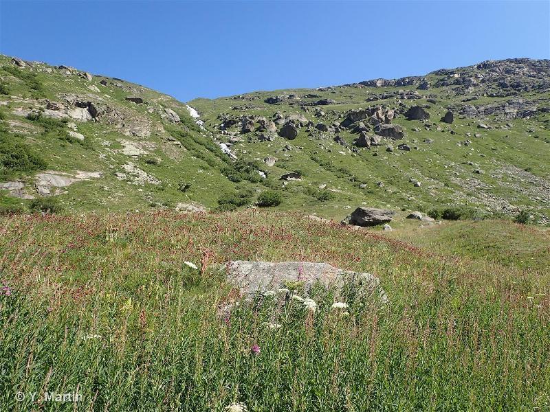 38.3 - Prairies de fauche de montagne - CORINE biotopes