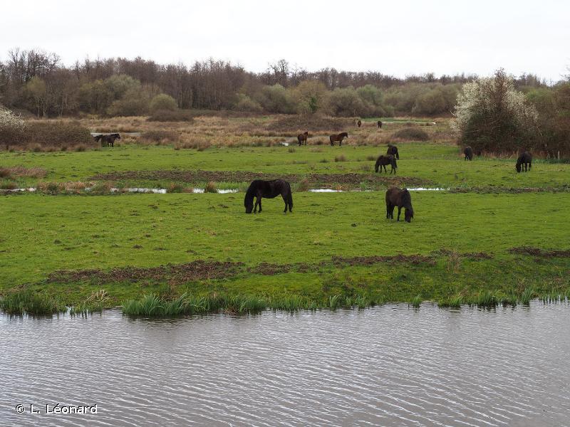 Marais de Bruges, Blanquefort et Parampuyre