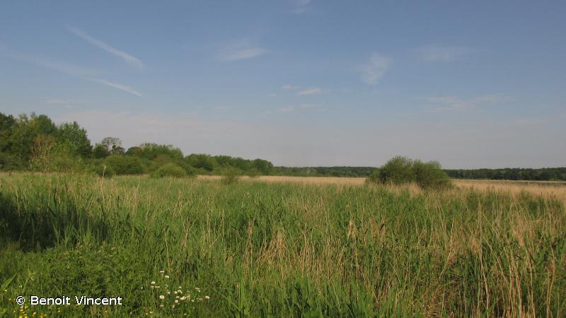 Étangs de Belval, d'Etoges et de la Grande Rouillie