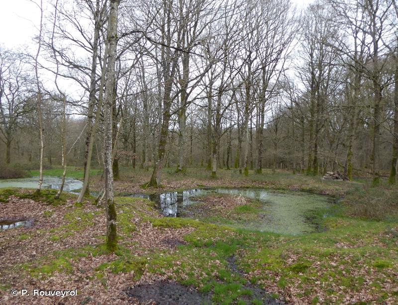 Landes, mares et bois acides du Plateau de Sorrus Saint Josse, prairies alluviales et bois tourbeux en aval de Montreuil