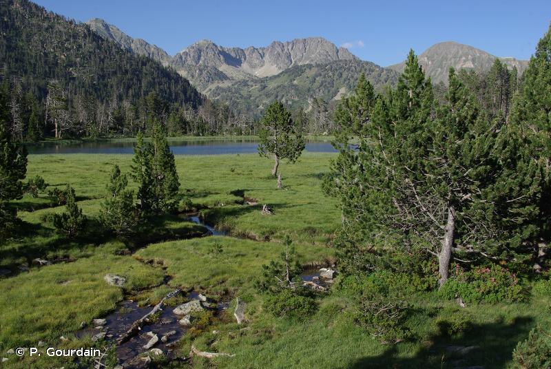 D2.2 - Bas-marais oligotrophes et tourbières des sources d'eau douce - EUNIS