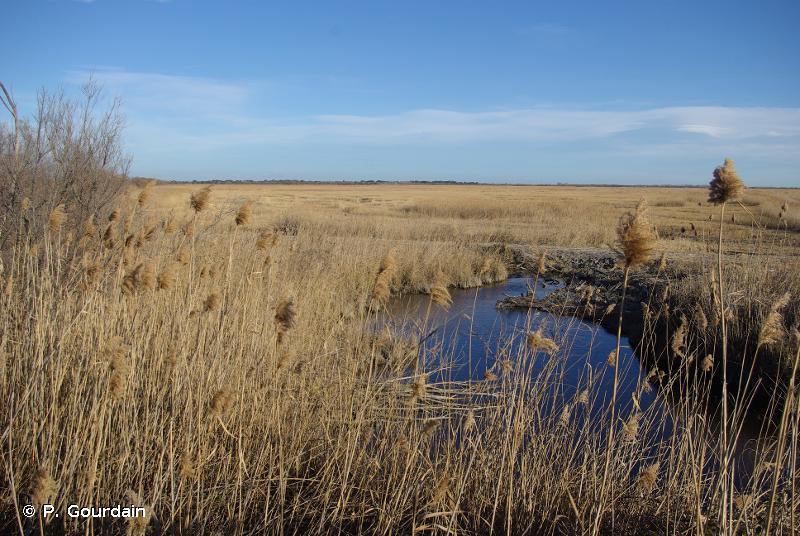 D6 - Marais continentaux salés et saumâtres et roselières - EUNIS