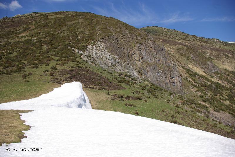 36.1 - Communautés des combes à neige - CORINE biotopes