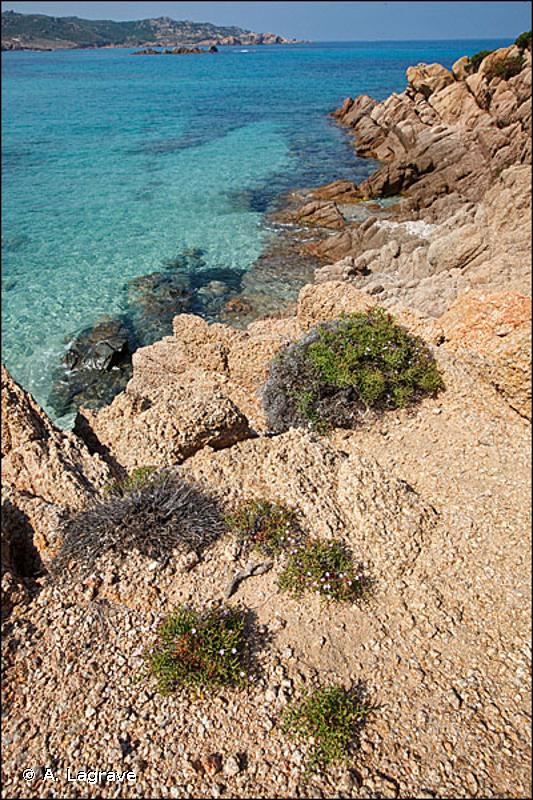 1240-2 - Végétation des fissures des falaises cristallines - Cahiers d'habitats