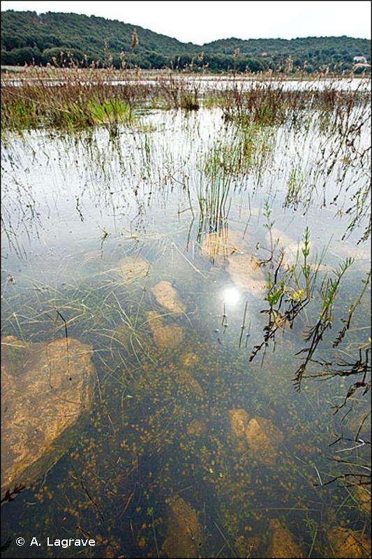 22.44 - Tapis immergés de Characées - CORINE biotopes