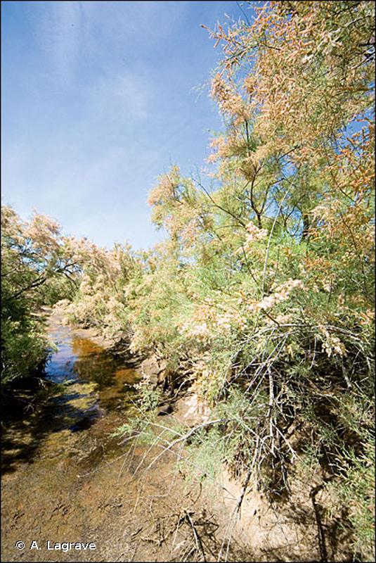 44.8 - Galeries et fourrés riverains méridionaux - CORINE biotopes