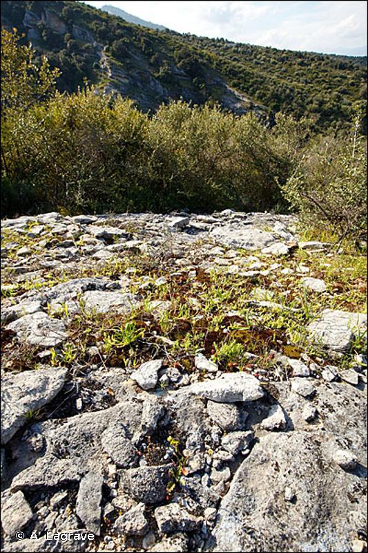 62.1 - Végétation des falaises continentales calcaires - CORINE biotopes