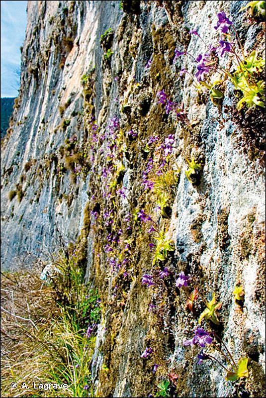 62.5 - Falaises continentales humides - CORINE biotopes