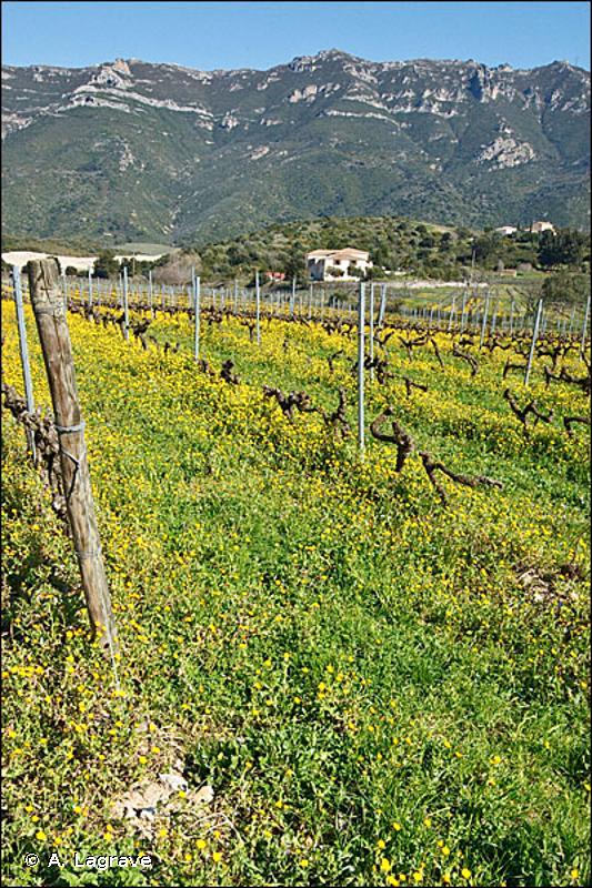 FB.41 - Vignobles traditionnels - EUNIS