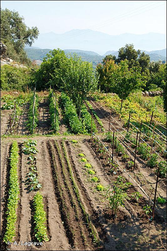 85.32 - Jardins potagers de subsistance - CORINE biotopes