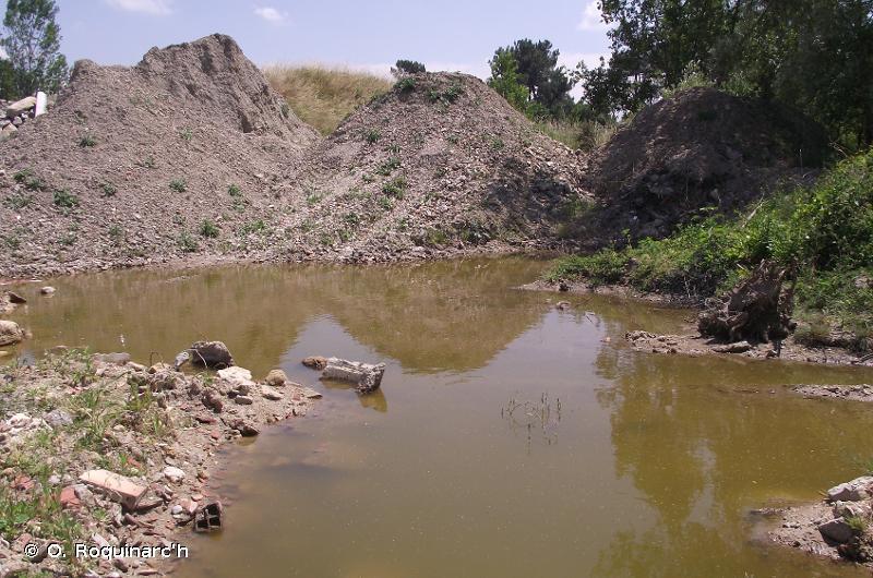 C1.6 - Lacs, étangs et mares temporaires - EUNIS