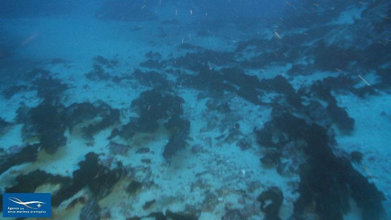 IV.2.2. - Biocénose du détritique côtier (DC) - Biocénoses benthiques de Méditerranée