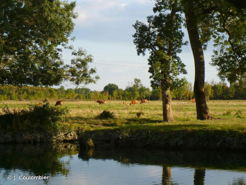 Moyenne vallée de la Charente et Seugnes et Coran
