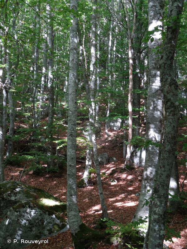 Vallées du Tarn, du Tarnon et de la Mimente