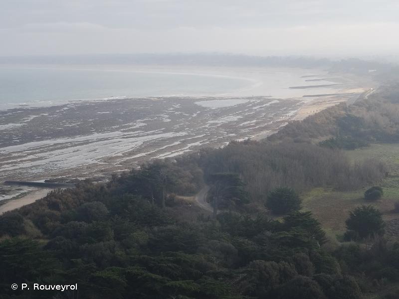 Ile de Ré : dunes et forêts littorales