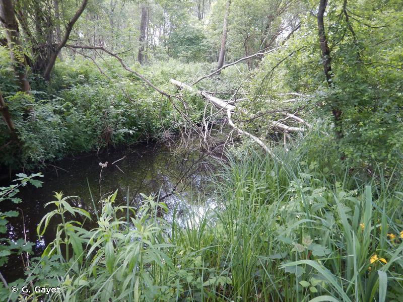 Marais de Sacy-le-Grand