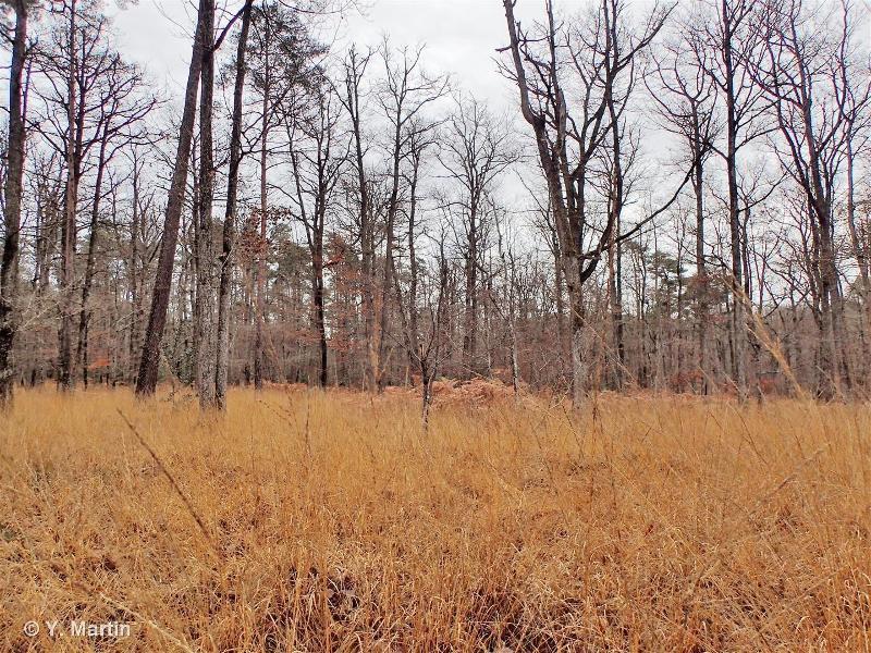G1.81 - Bois atlantiques de <em>Quercus robur</em> et <em>Betula</em> - EUNIS