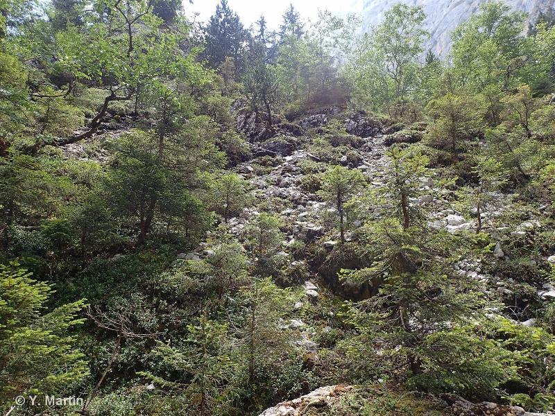 G3.322 - Pinèdes de Pin à crochets à Genévrier et à Raisin d'ours des Alpes externes - EUNIS
