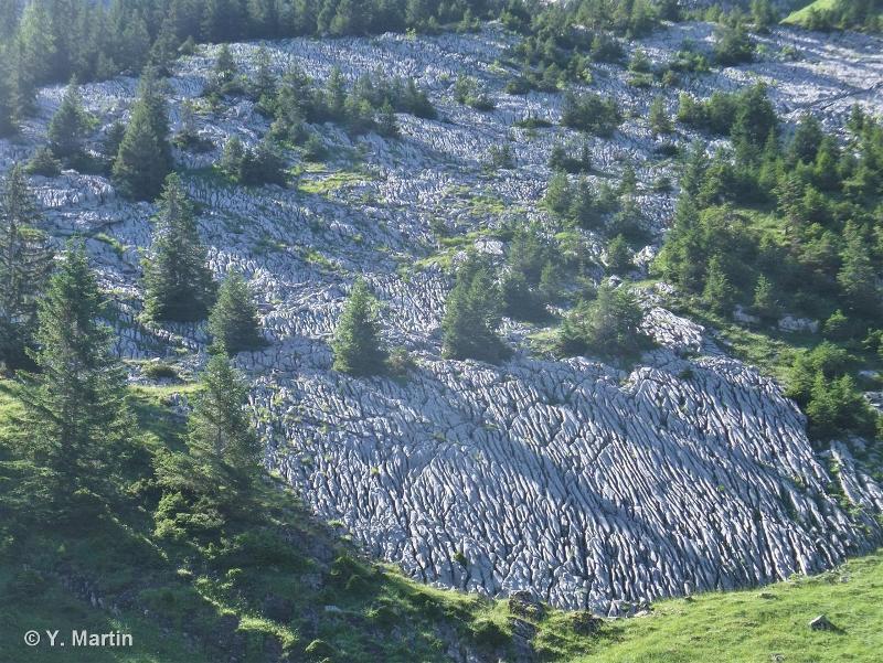 62.3 - Dalles rocheuses - CORINE biotopes