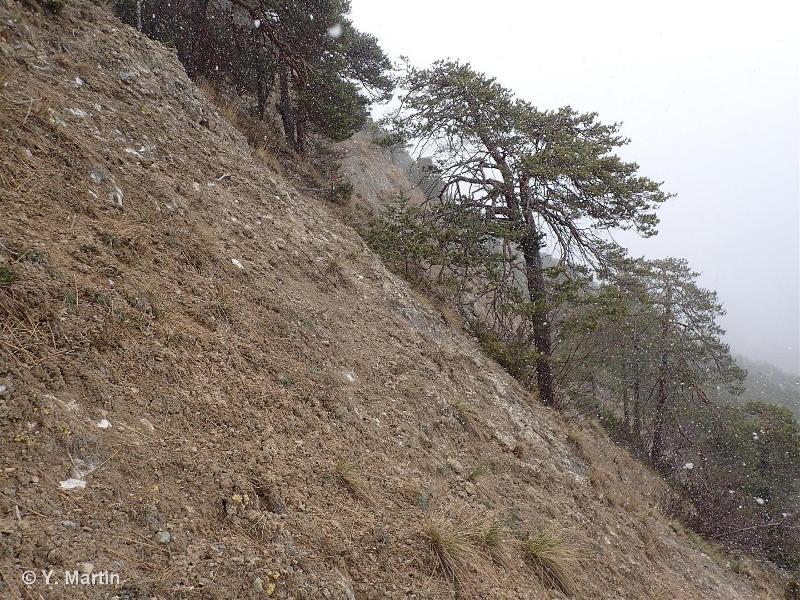 Pinèdes autour du monolithe de Sardières