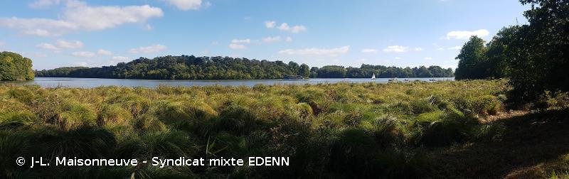 Marais de l'Erdre
