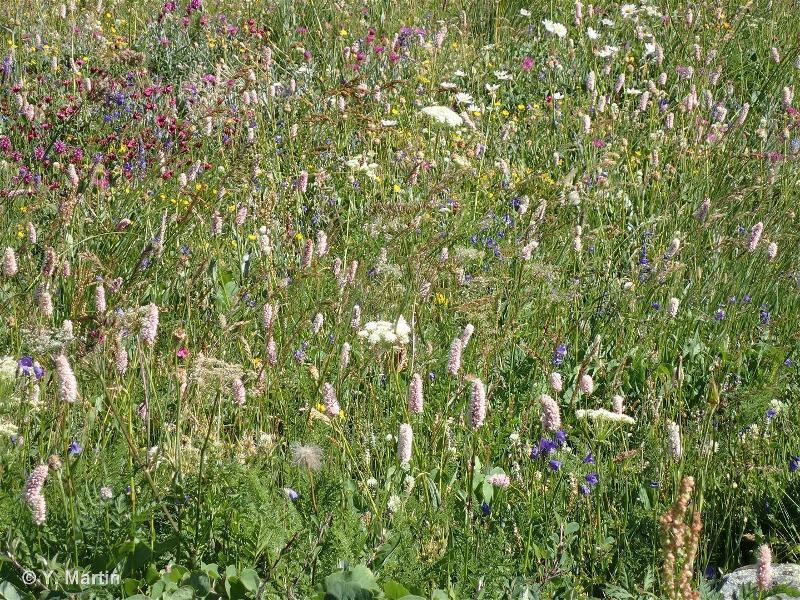 38 - Prairies mésophiles - CORINE biotopes