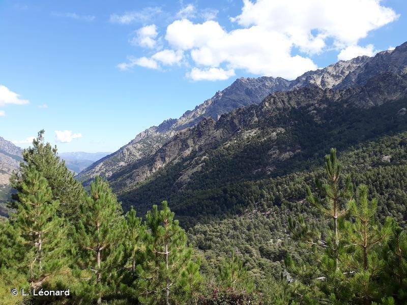 Haute vallée d'Asco, forêt de Tartagine et aiguilles de Popolasca