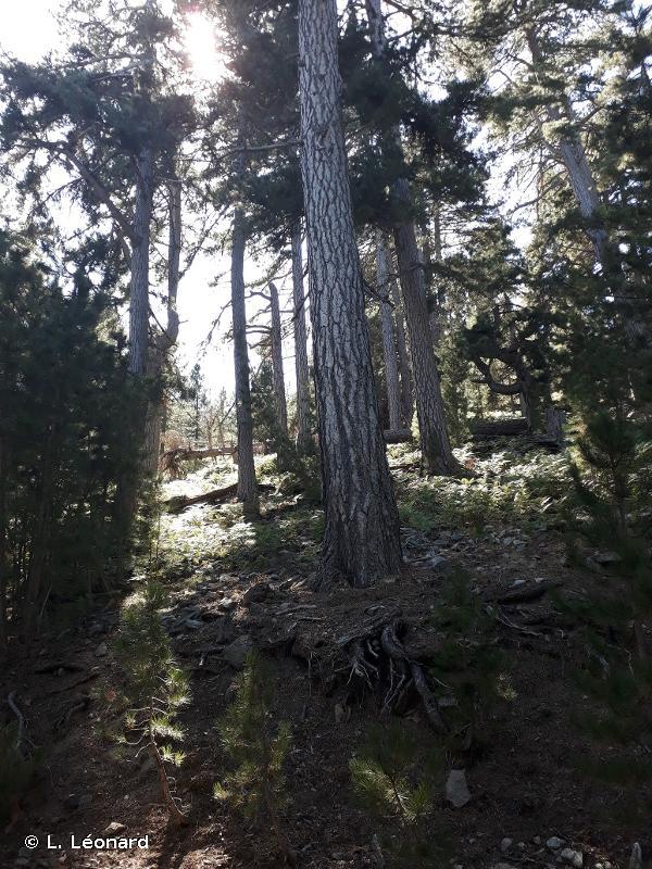 Forêts Territoriales de Corse