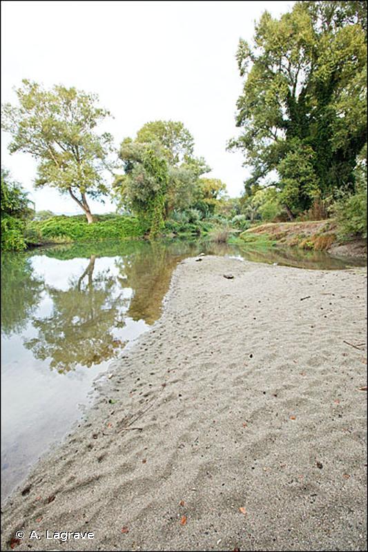 24.31 - Bancs de sable des rivières sans végétation - CORINE biotopes
