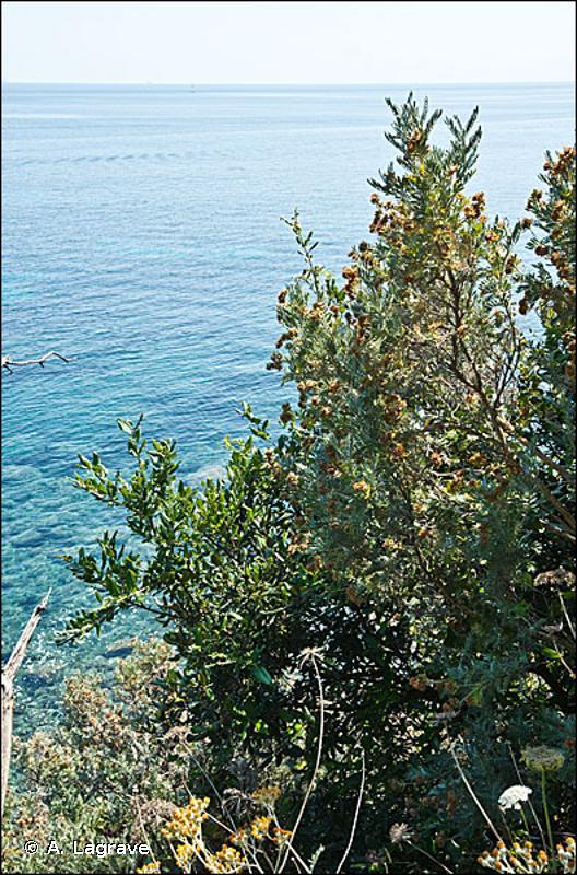 F7.112 - Phryganes de la Provence cristalline - EUNIS