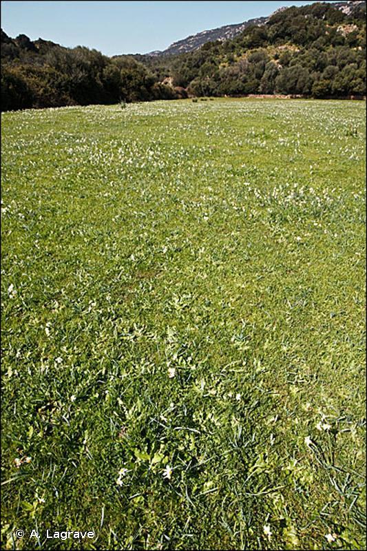 6510 - Prairies de fauche de basse altitude (<em>Alopecurus pratensis</em>, <em>Sanguisorba officinalis</em>) - Habitats d'intérêt communautaire