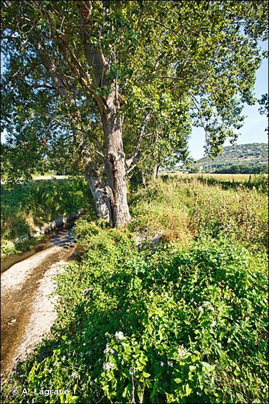G1.31 - Forêts riveraines méditerranéennes à Peupliers - EUNIS