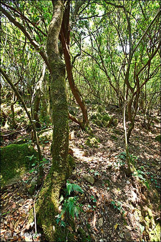 45.313 - Forêts de Chênes vert des collines catalo-provençales - CORINE biotopes