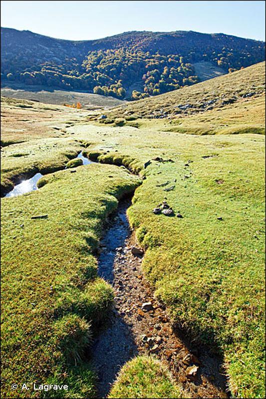 D2.24 - Pozzines (dépressions humides entourant les lacs glaciaires) à <em>Carex intricata</em> - EUNIS