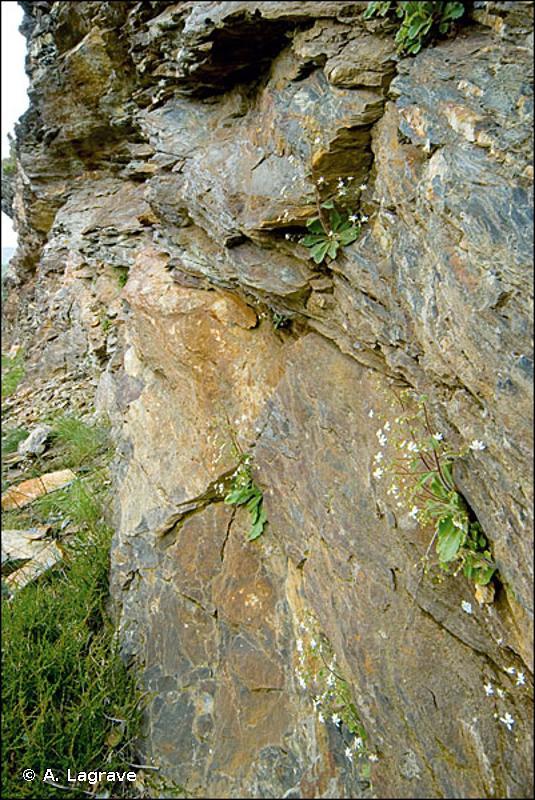 H3.16 - Falaises siliceuses montagnardes péripyrénéennes - EUNIS