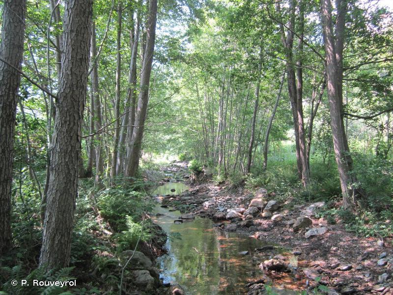 91E0 - Forêts alluviales à <em>Alnus glutinosa</em> et <em>Fraxinus excelsior</em> (<em>Alno-Padion</em>, <em>Alnion incanae</em>, <em>Salicion albae</em>) - Habitats d'intérêt communautaire